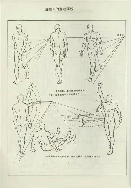 速写干货|人体结构解剖,比例透视全能解析图,速写人图片